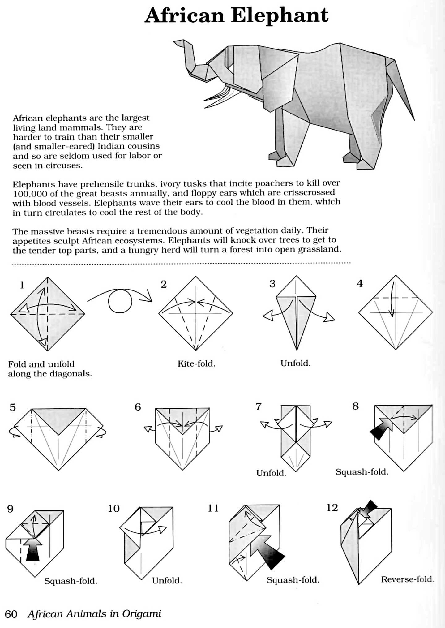 Image Result For Money Origami Elephant Instructionspdf