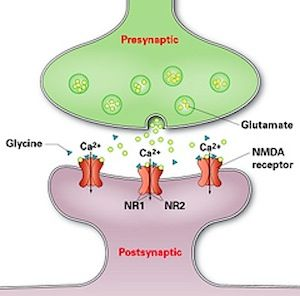 Anti Nmda N Methyl D Aspartate Receptor Encephalitis Is An Acute