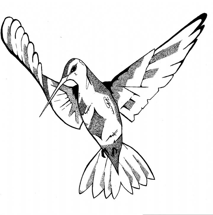 Photo of Hand drawn pen illustration by krisbromleyart #hummingbird #bird #birds #draw #s…
