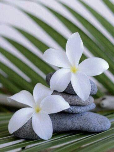 Pin von Lola auf Plumeria flowers | Pinterest