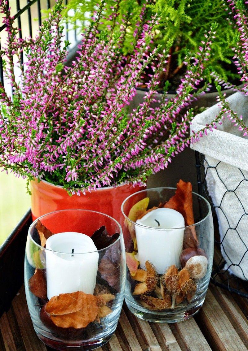Fleurs pour balcon 7 fleurs d'hiver en pot à cultiver au