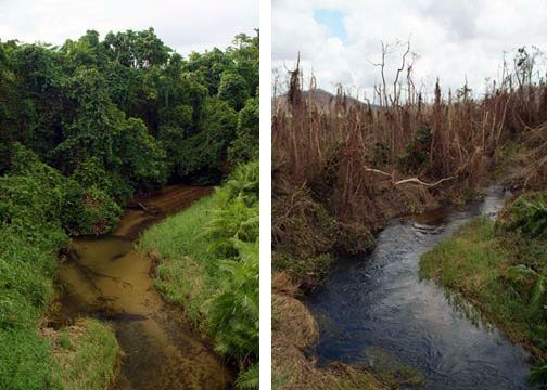 deforestation before and after - Google Search ...