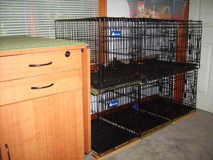 Stacked Dog Crates Dog Crate Dog Organization Dog Rooms