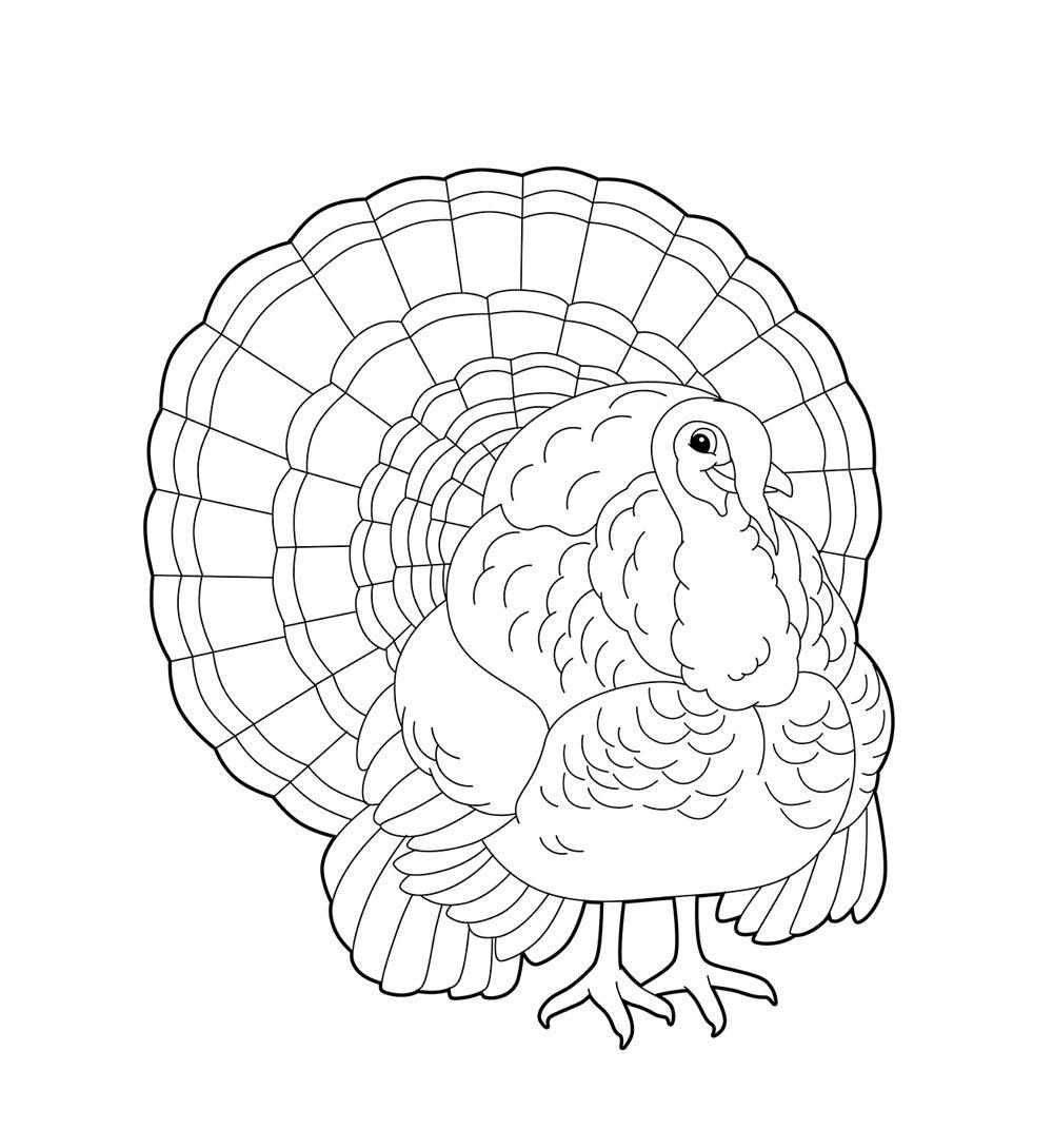 раскраска птицы индюк раскраска творчество птицы