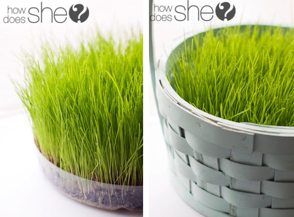 Grow your own easter basket grass easter baskets potting soil grow your own easter basket grass negle Choice Image