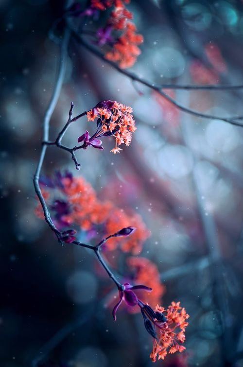 Pin By Ayse Keles On Ciceklerim With Images Flower Background Wallpaper Flowers Photography Flower Backgrounds