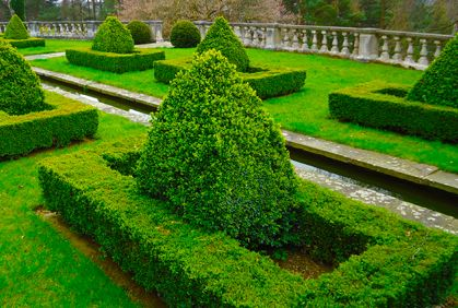 Evergreen trees for landscaping designs, DIY ideas, photo gallery and 3D design software tools.