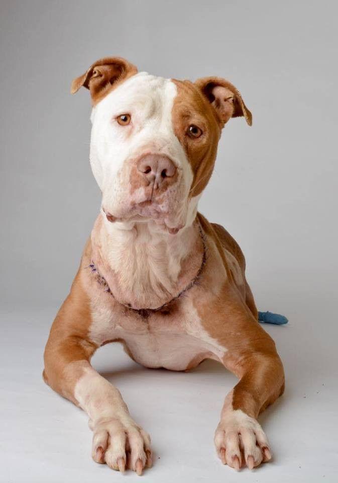 Dfw Rescue Me Khaleesi S Men S Tee Dog Adoption Pitbull