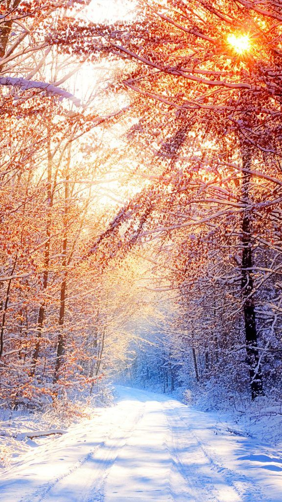 Snow Trees Winter Morning 4k Ultra Hd Mobile Wallpaper Winter Wallpaper Iphone Wallpaper Winter Winter Iphone