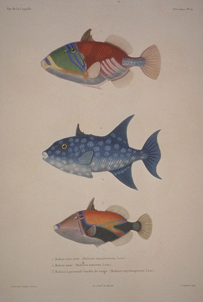 Poisson D Avril En 2019 Illustration De Poisson Art De Poissons