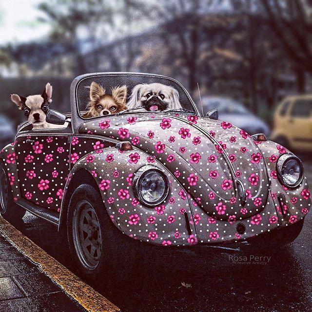Perfect Love Bug #fantasy #vw #beetle #dogs #joyride