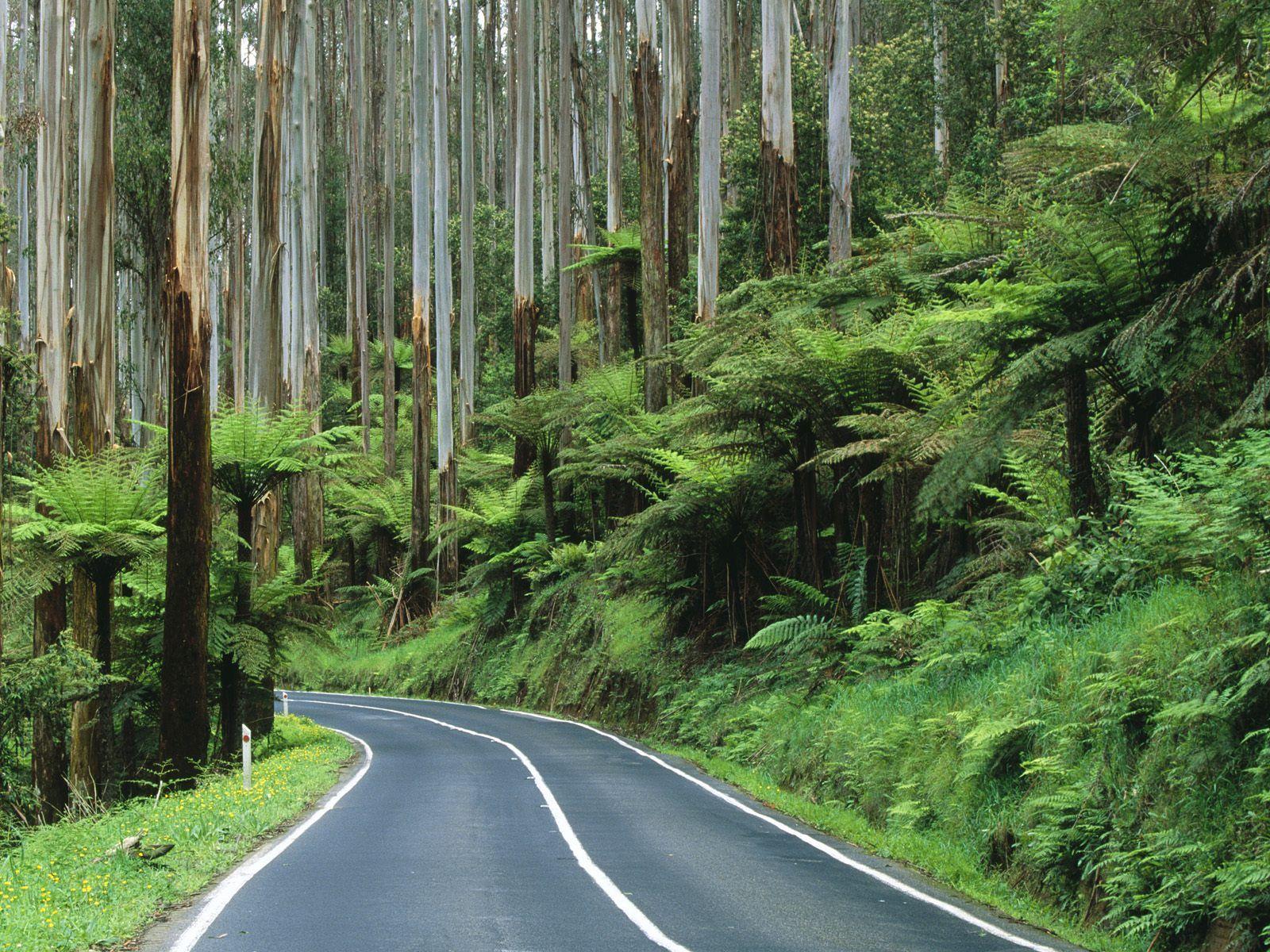australian rainforest landscapes