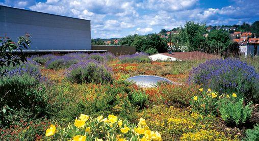 Dachbegrünung Pflanzen - Google-suche | Dach | Pinterest Intensive Extensive Dachbegrunung Nachhaltig