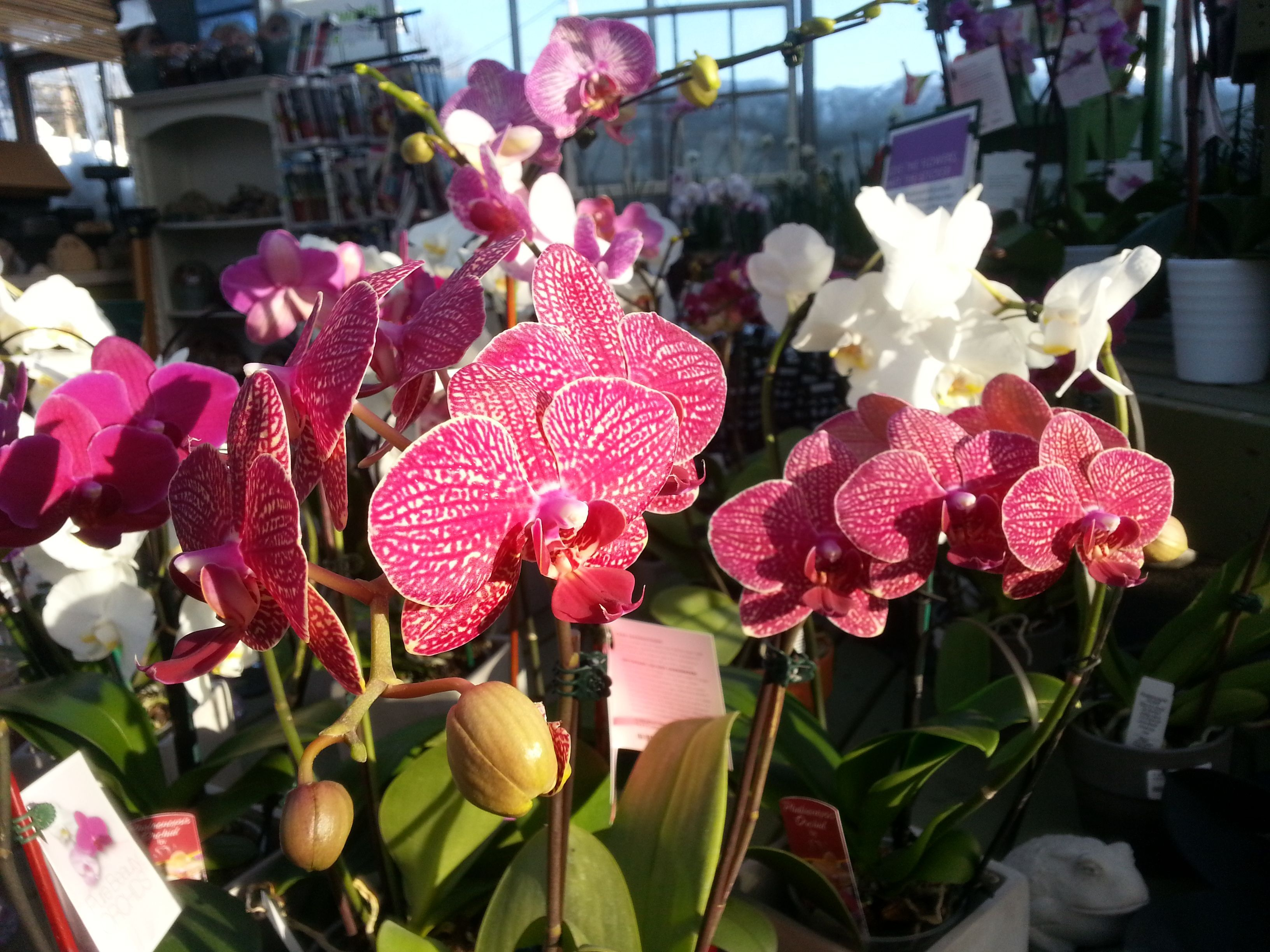 Five things to know about growing orchids #growingorchids Five things to know about growing orchids #growingorchids