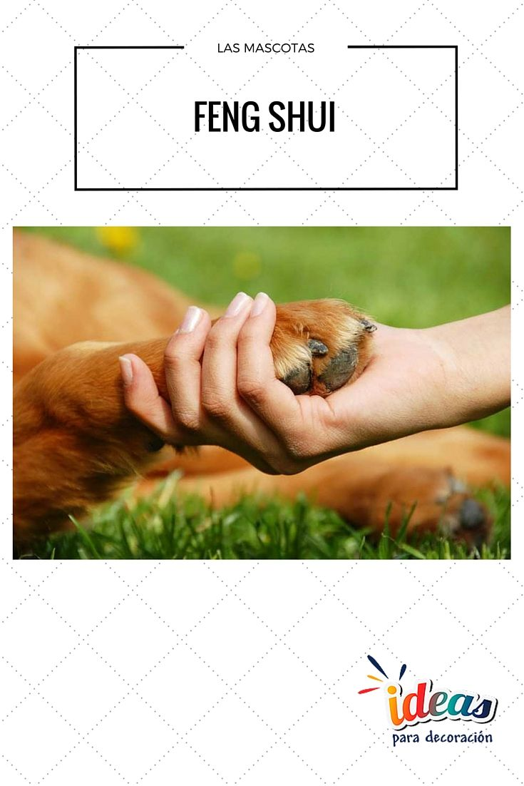 Las mascotas en el hogar fengshui feng shui for Tips de feng shui para el hogar