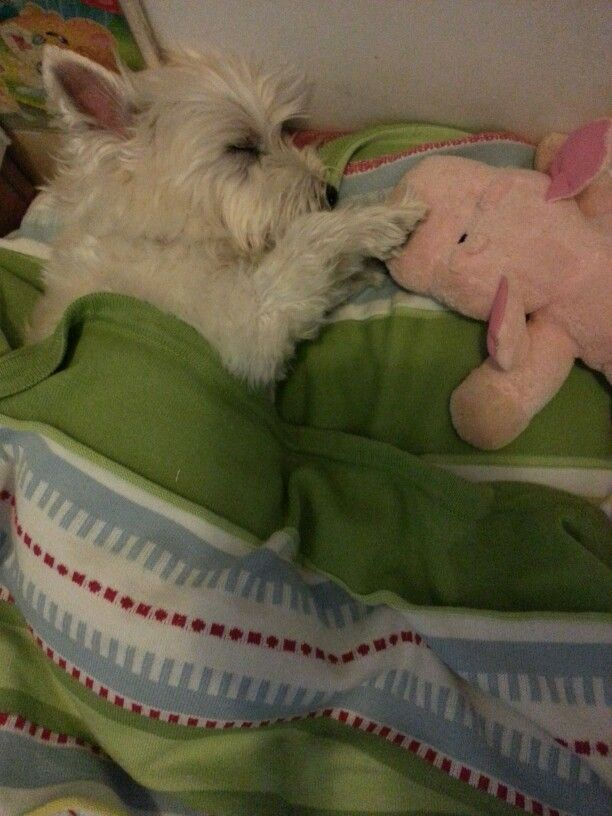 Cute- reminds me of my Chassie. She loved her piggy .