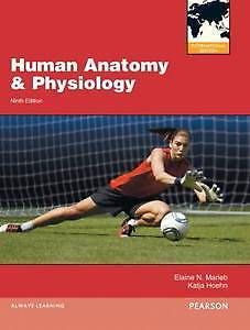 Dr Knowledge Human Anatomy Physiology 9th Edition By Marieb Human Anatomy And Physiology Human Anatomy Anatomy And Physiology