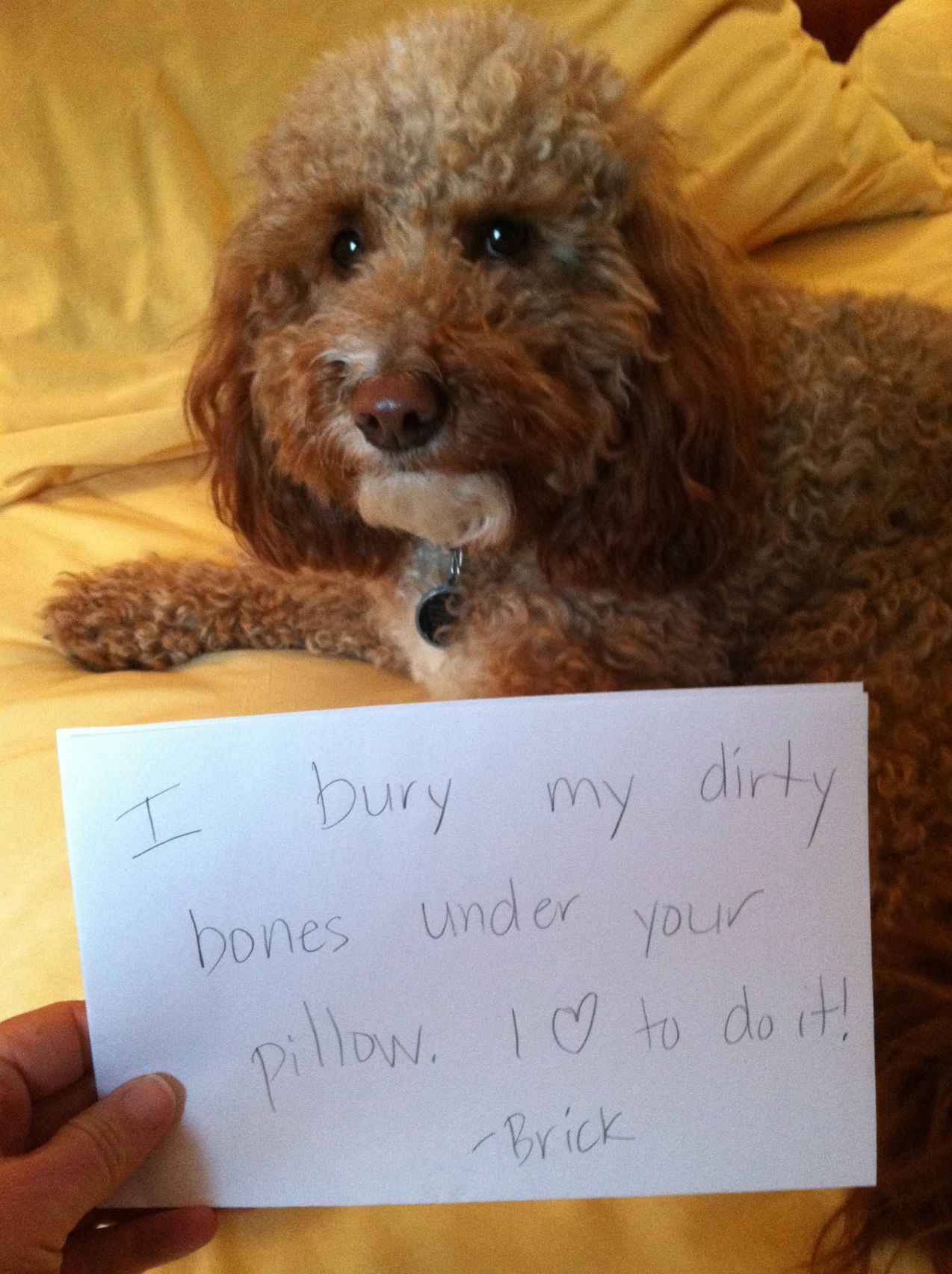 pin by brian frost on dog shaming a new obedience tool
