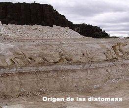tierra de diatomeas lombrices