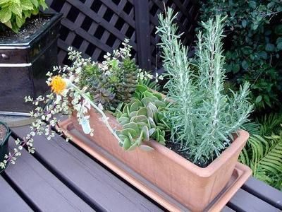 Container Flower Gardening Ideas Succulents Container