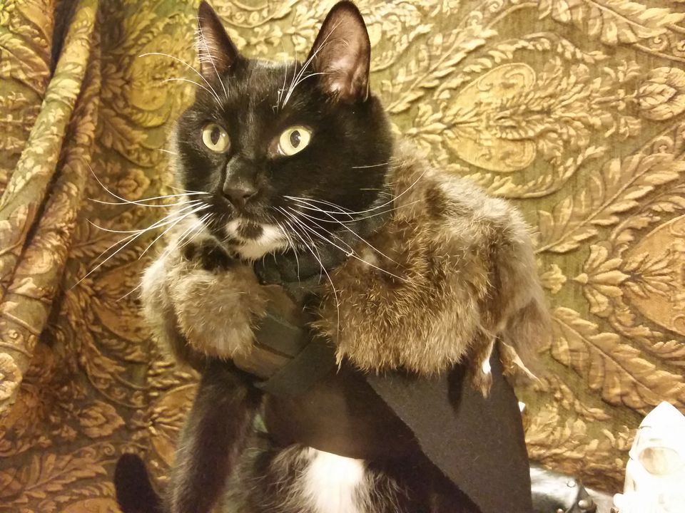 15 Purrfect Halloween Costumes for Your Cat Pet