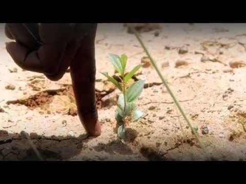 Ecosia | Der Blog — Neues Projekt, noch mehr Bäume Ecosia ging es...