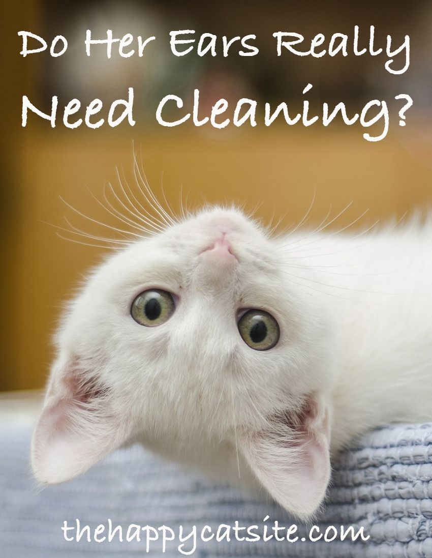 How To Clean Cats Ears A Guide To Cleaning Cat Ear Wax And Dirt Cat Scratching Ears Cat Care Cat Diseases