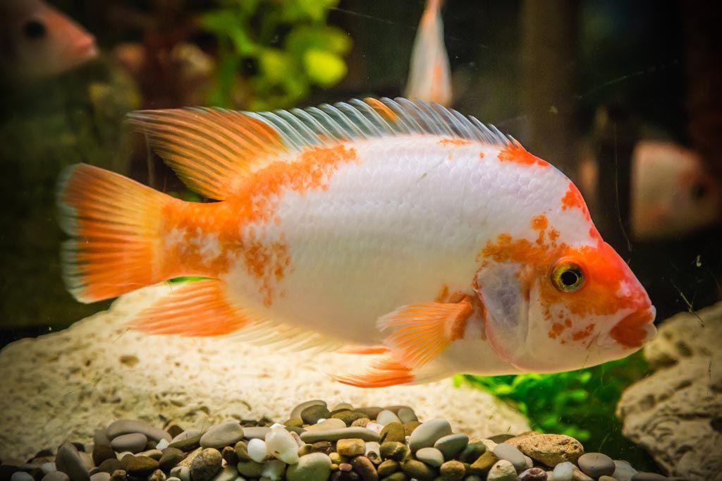 Tropical Aquarium Fish Diseases Aquarium Fish Betta Fish Tropical Aquarium