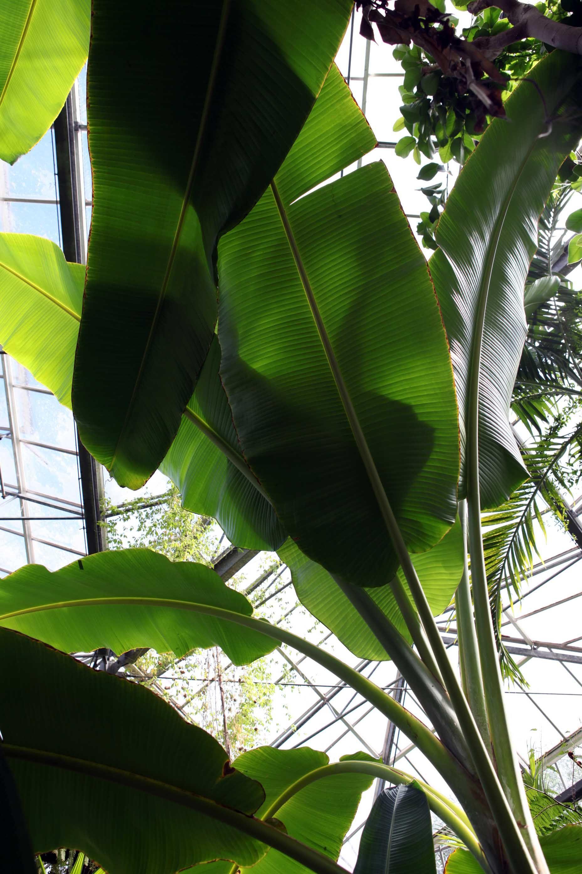 De Hortus Botanicus Amsterdam planten plants