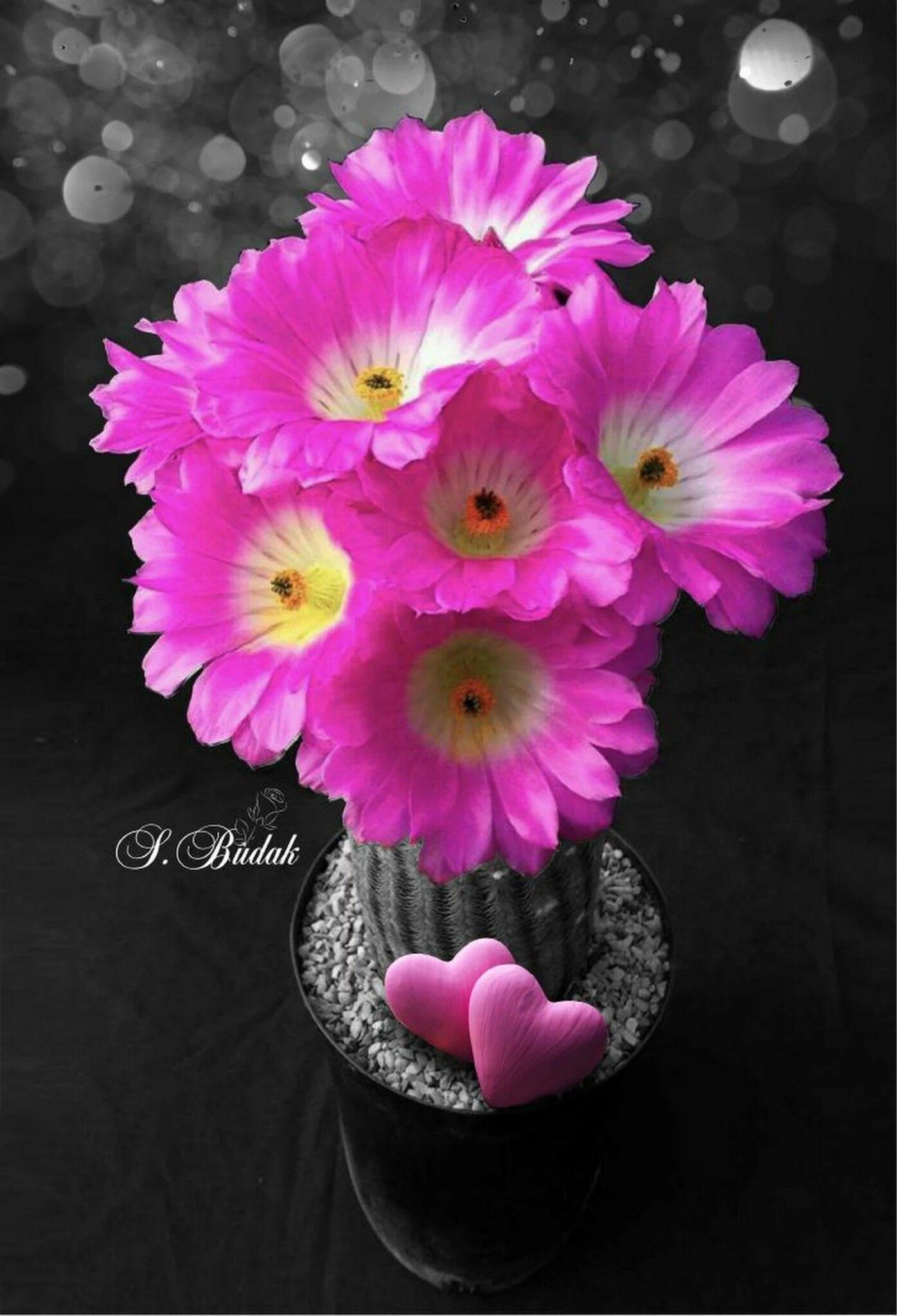 Pin By Tina Tina On Good Morning Color Splash Beautiful Flowers