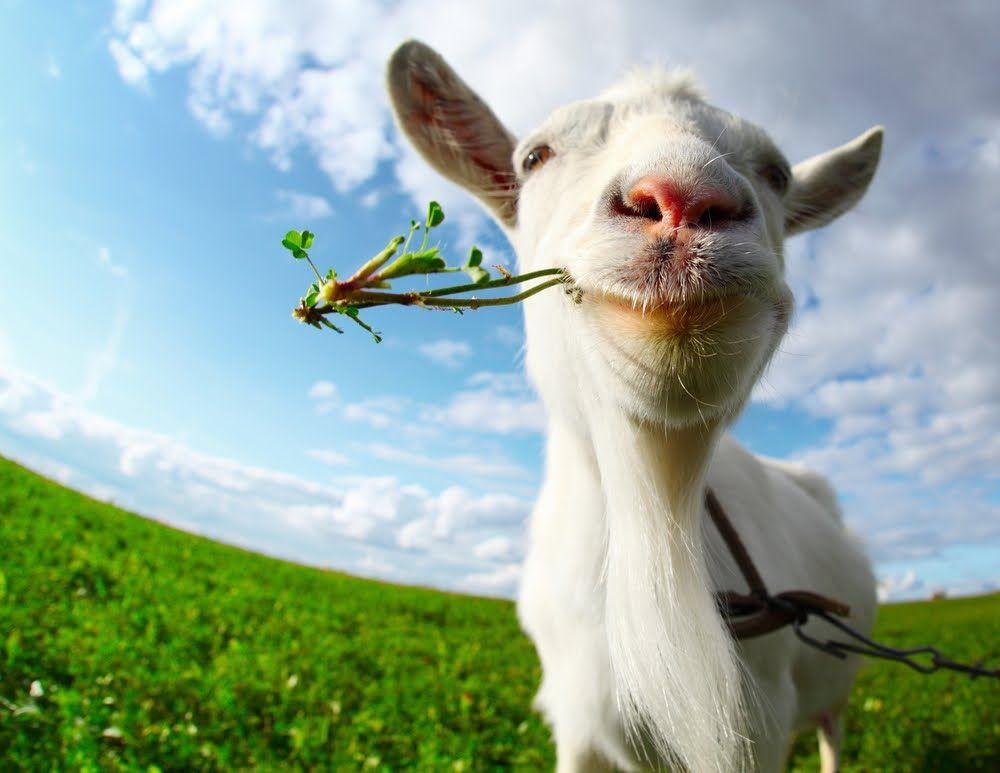 16++ Animal farm chapter summaries images