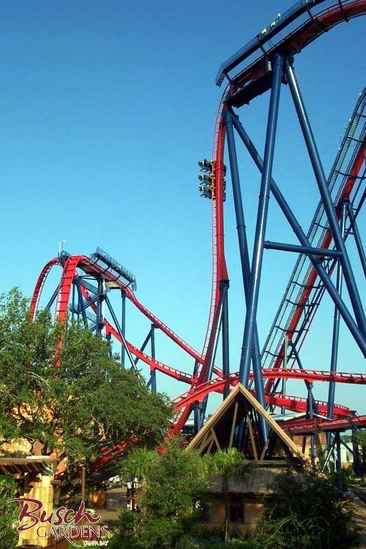 Sheikra Roller Coaster Google Search Amusement Park Rides Roller Coaster Thrill Ride