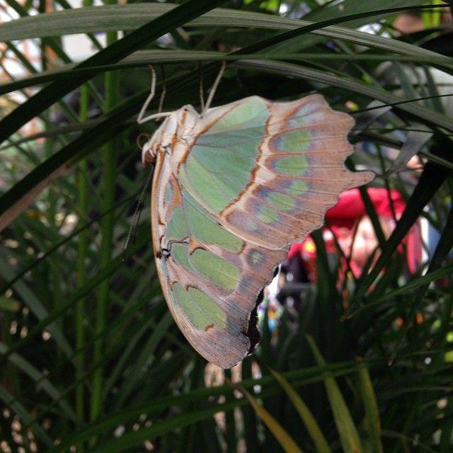 Leyla Rudolf @leyla_rudolf Butterflies  #se...Instagram photo | Websta (Webstagram)
