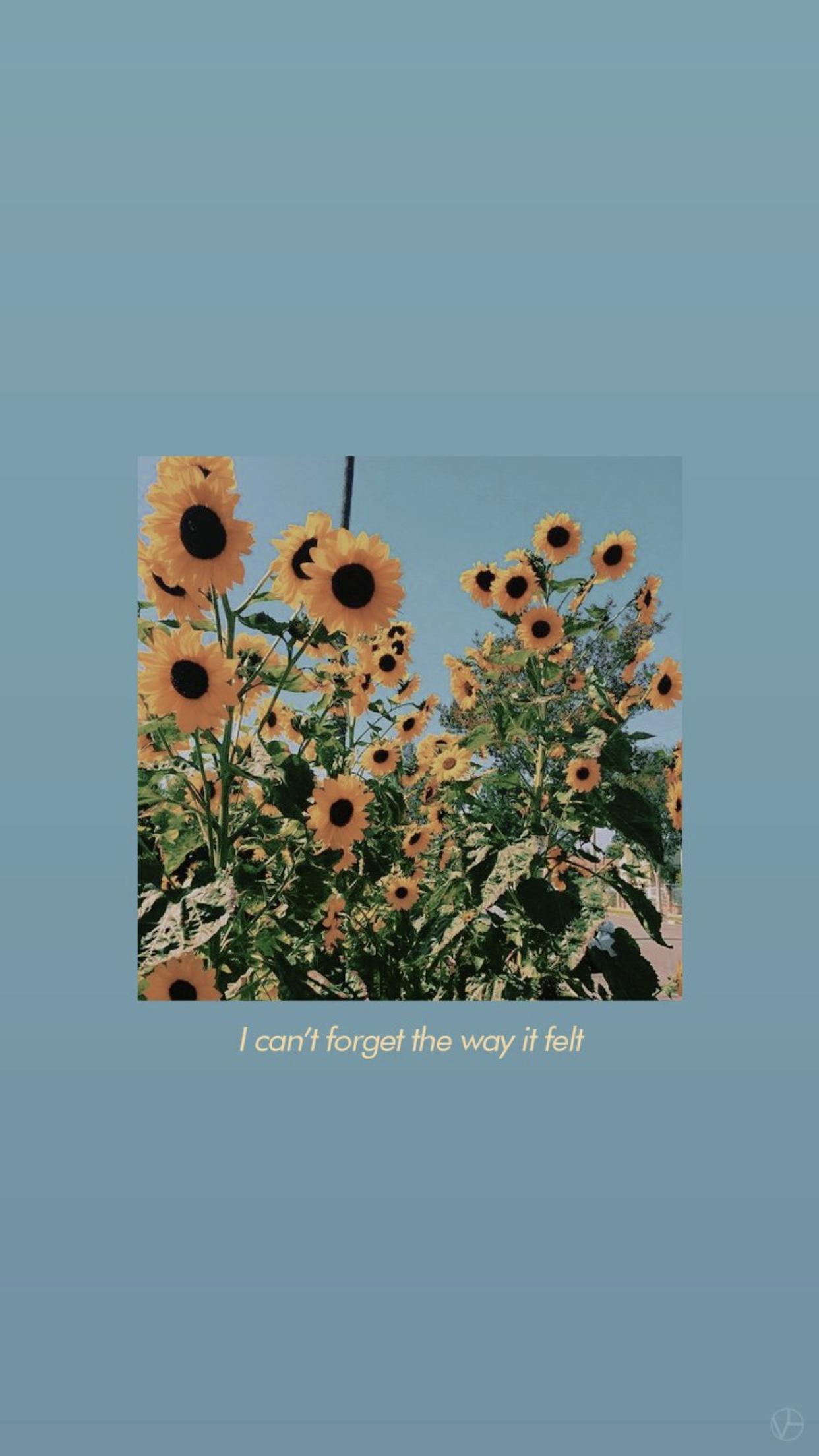 lockscreen sunflower wallpaper aesthetic iphone