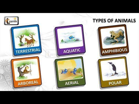 Types of animals   Animals video for kid   Kindergarten Learning videos playlist