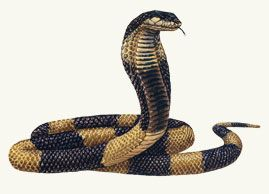 Afbeeldingsresultaat voor egyptian cobra artwork
