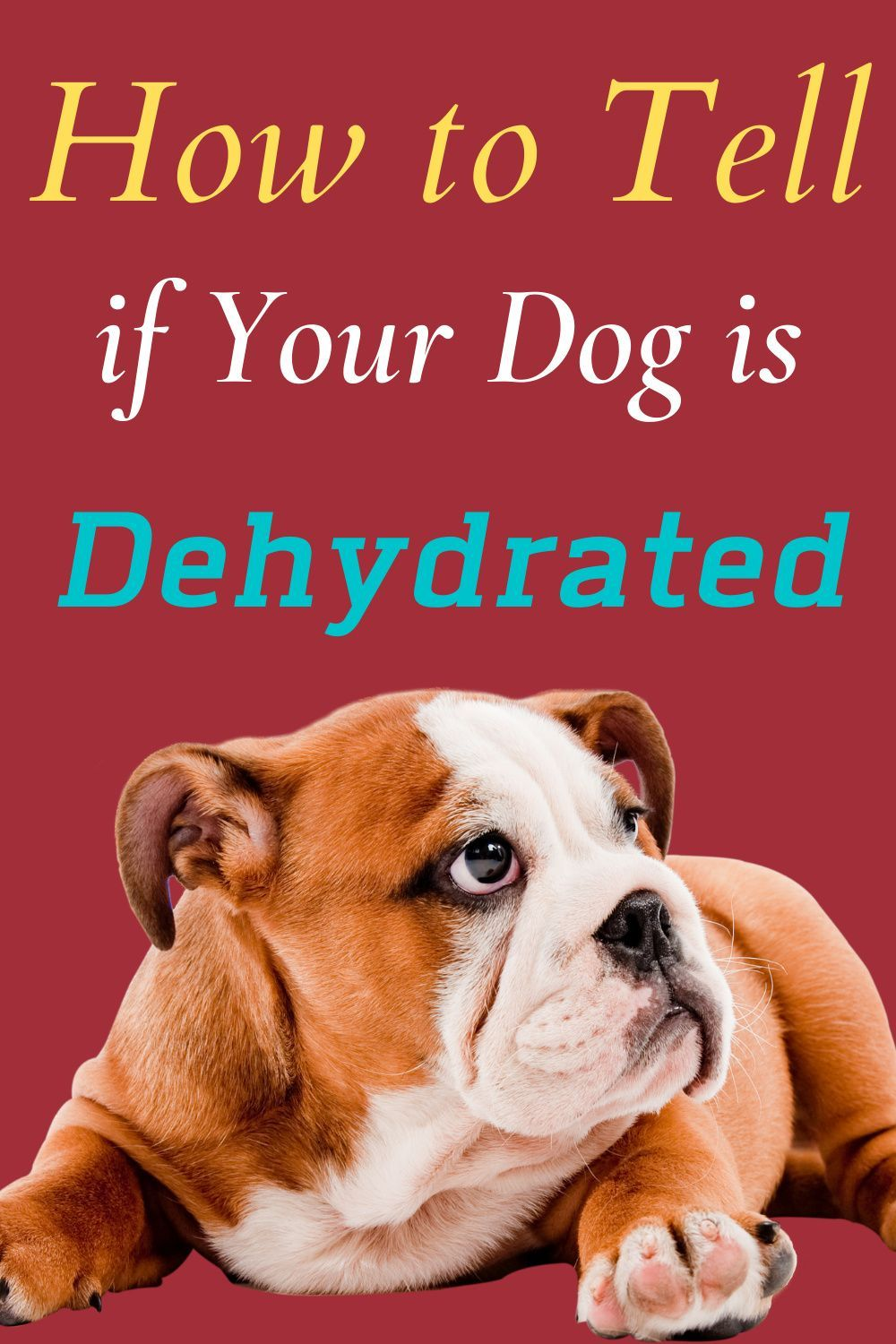 How To Tell If Your Dog Is Dehydrated Pets Daily Life Your Dog Dog Health Dog Care Tips