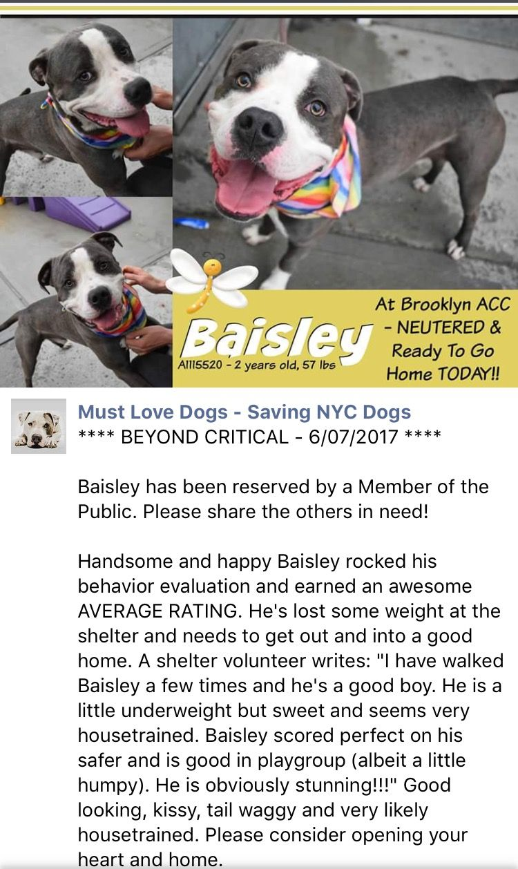 ADOPTED ❤️7/9/17 Brooklyn Center My name is BAISLEY. My Animal