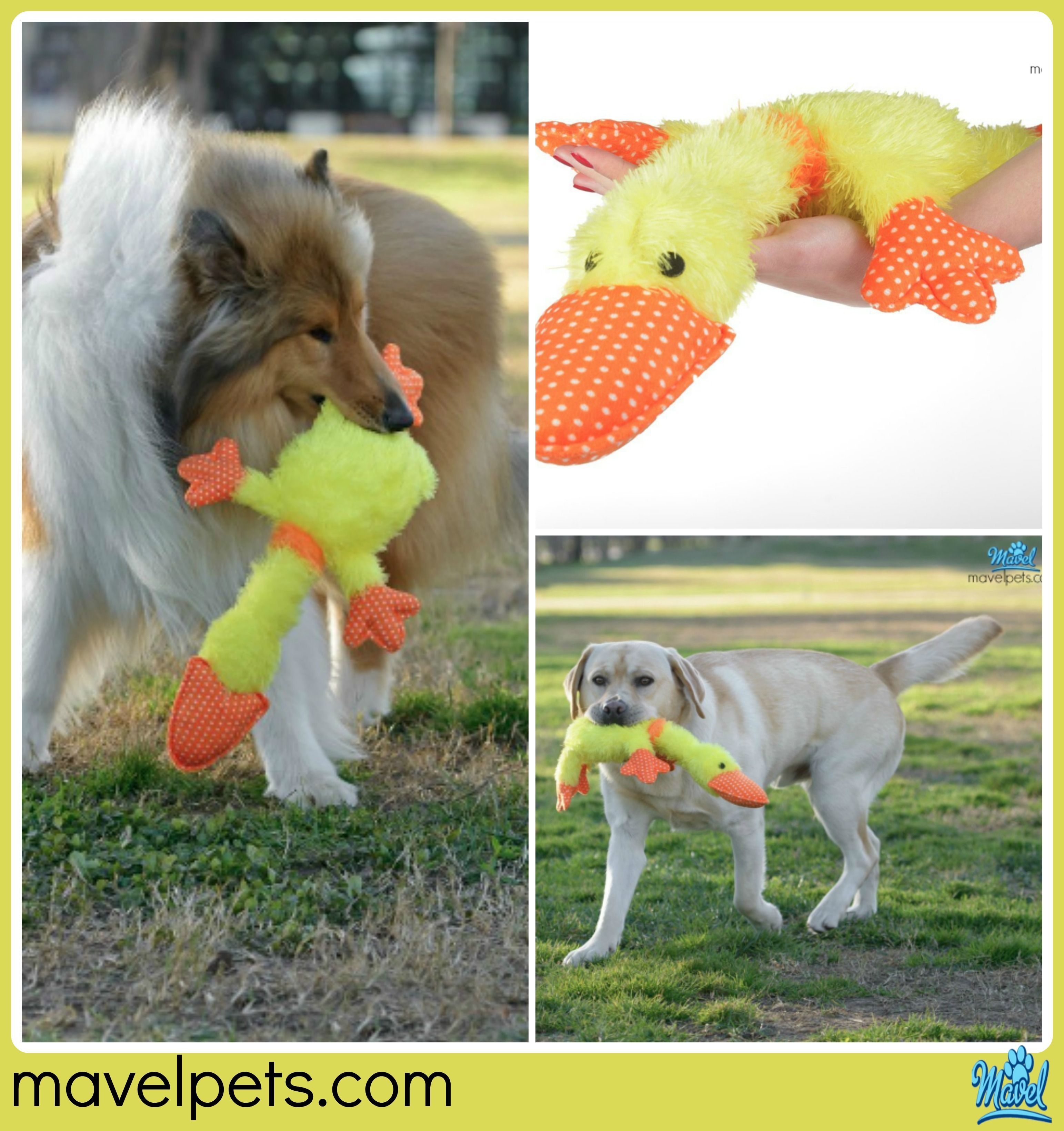 Toy For Dogs Puppies Top Cool Dog Chew Toy Squeaky Toys For
