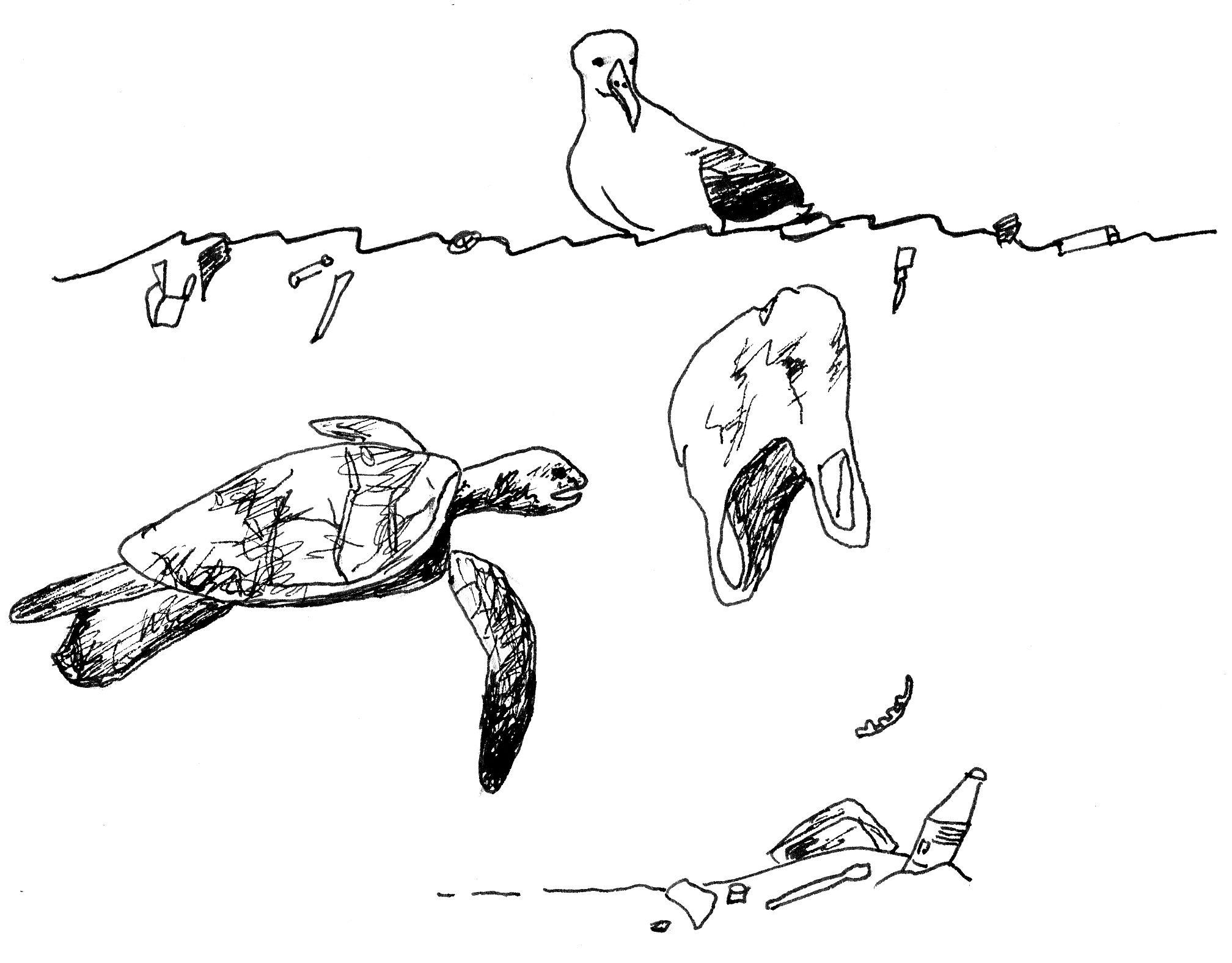 Turtle Caught In Plastic