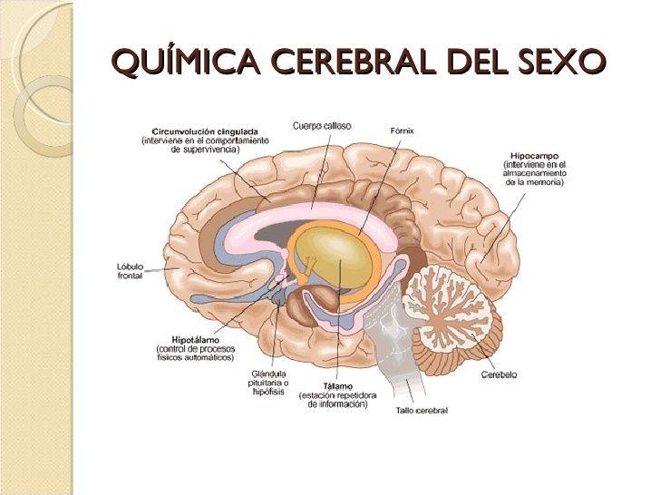 Excepcional Anatomía Y Fisiología Información Embellecimiento ...