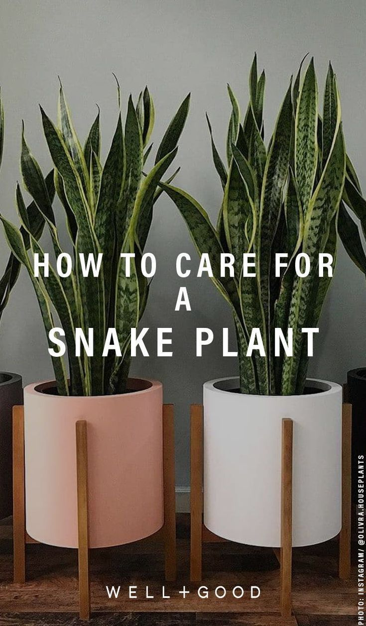 Here's exactly how to care for your new snake plan