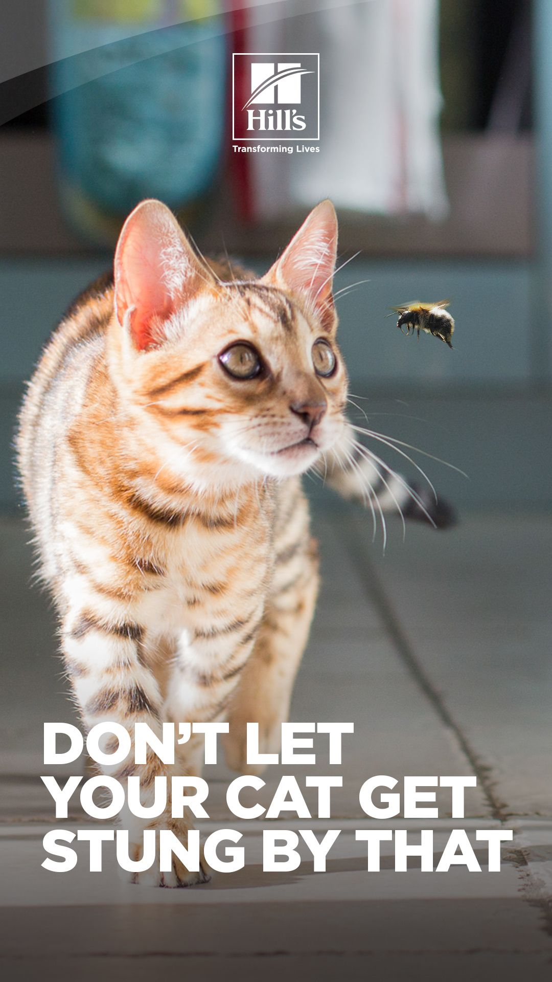 Cat Stung by Bee or Wasp? What You Need to Know Hills