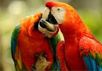 A Amazonia Fauna E Flora No Equilibrio Ecologico Da Amazonia Parrot Latin America Travel Pantanal