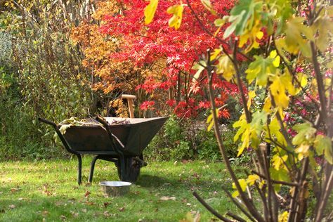 10 Fall Cleanup Tips for a Better Spring Garden is part of lawn Tips Mulches - 10 fall garden tasks fall leaf cleanup, mulching, lawn care, and winterizing your garden