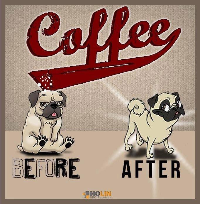 Coffee Pugs Cute Pugs Funny Memes