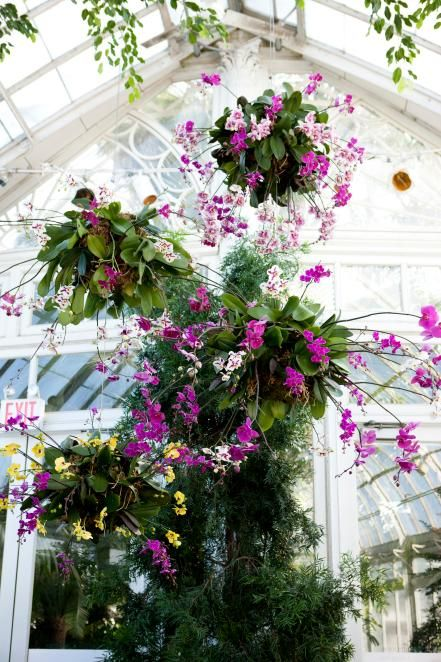 Orchid chandeliers tropical flowers orchid and plants orchid chandeliers orchid showthe mozeypictures Gallery