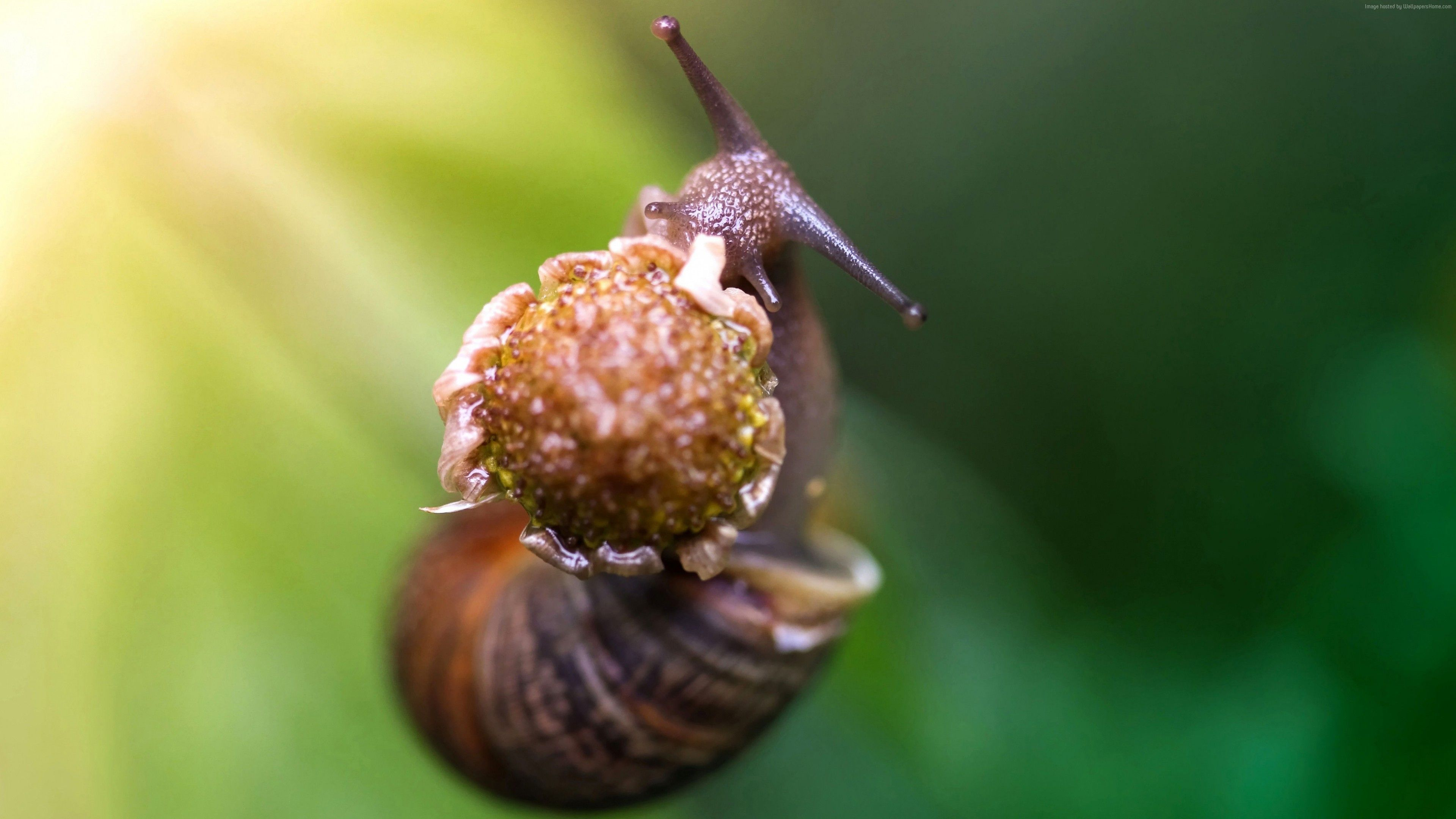 Wallpaper snail, eating flower, green background, nature ...