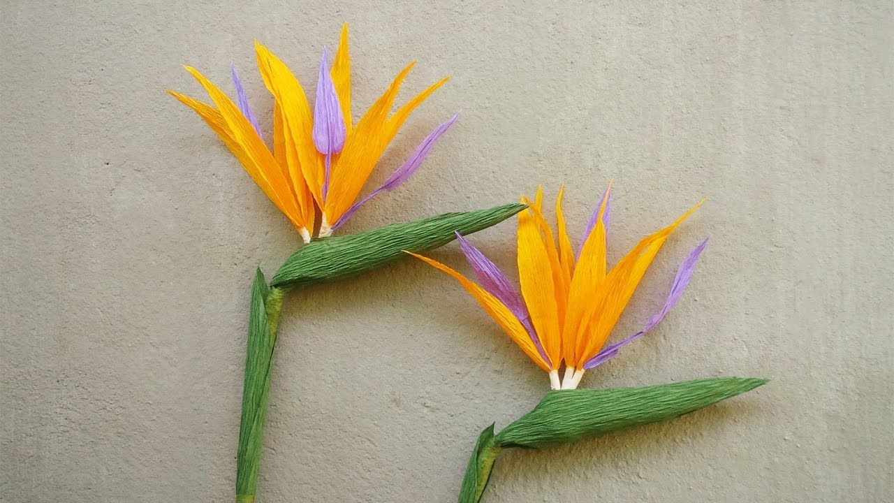 Abc Tv How To Make Bird Of Paradise Paper Flower From Crepe Paper