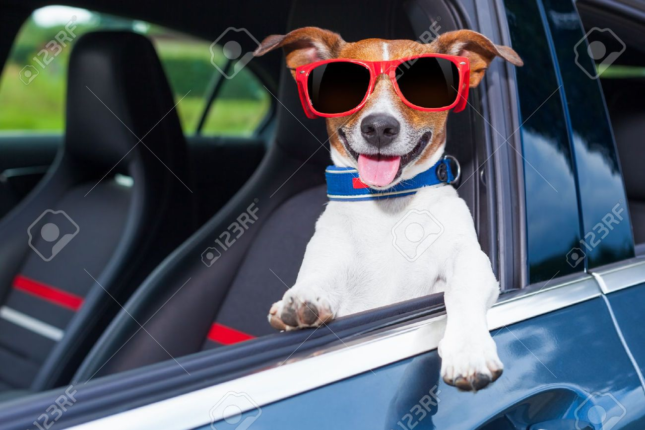 Outstanding Why Do Dogs Like To Hang Their Head Out The Car Window Why Evergreenethics Interior Chair Design Evergreenethicsorg